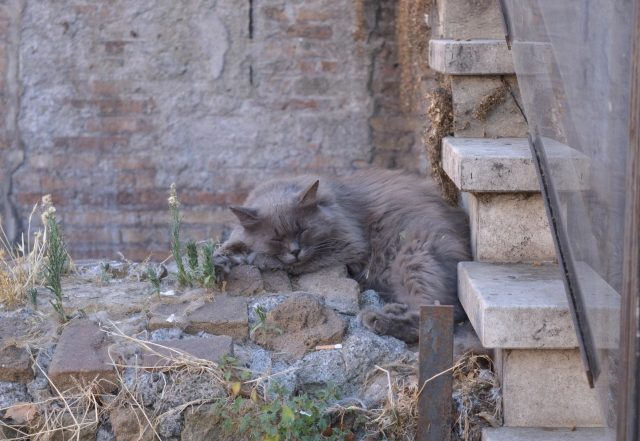 A Cat Sanctuary in the Heart of Rome